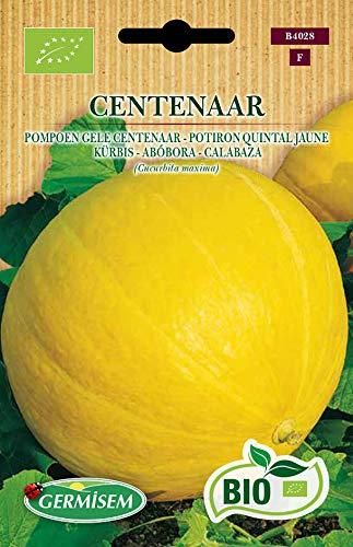 Germisem Orgánica Centenar Semillas de Calabaza 2 g