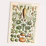 Follygraph Legumes et Plantes Potageres Gemüse Bild -
