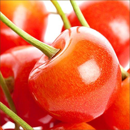 お中元 北海道 増毛町産 さくらんぼ 南陽 1kg(秀品/2Lサイズ以上/500g×2/手詰め) 北海道産 サクランボ 果物 フルーツ お取り寄せ