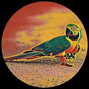 POMSL (Parrot on My Sun Lounger)