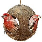 SLU Birdcage - Conchiglia di cocco Simulazione Birdhouse, mini condo naturale per uccelli, consistenza di noce di cocco fornisce cibo per gli animali da compagnia (marrone)
