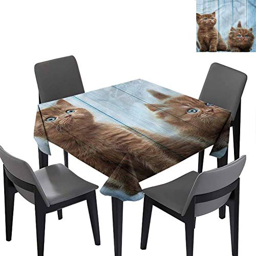 Animal Small Square Tablecloth Baby Kitten Best Friend for Banquet Decoration Dining Table Cover 36x36 inch