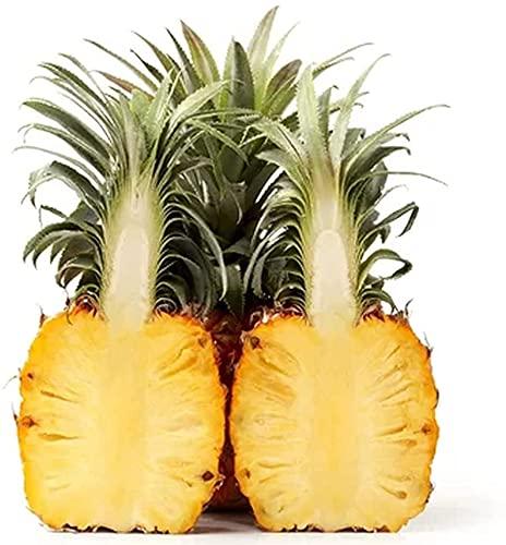 60 piezas de semillas de piña disfrutan de la cosecha de la alegría necesaria fuerte adaptabilidad fruta crecimiento natural atractivos colores brillantes no necesitan mucho cuidado