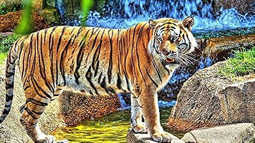 LIWeißY DIY maßen Nach Zahlen Kits,  em e, maßen Nach Zahlen Für Erwachsene Leinwand Home Decor, Junge Tiger, Mit Rahmen, 50x6cm