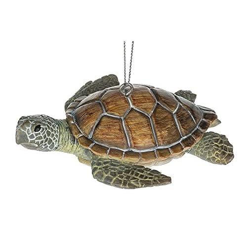 Sea Turtle Shell Amazon Com