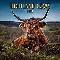 Lyrical Scotland 2021 Highland Cows Cale