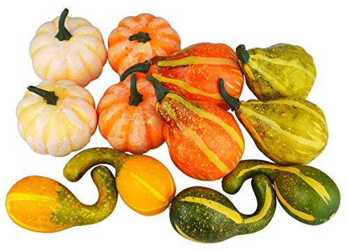 Top mini pumpkins and gourds for decorating for 2020