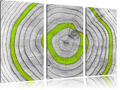 Green Tree ringenFoto Canvas 3 deel | Maat: 120x80 cm | Wanddecoraties | Kunstdruk | Volledig gemonteerd