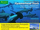The Sea of Hammerhead Sharks - Diving Photo Collection - Mikomoto Island Japan Documentary Photography (NATURE's Sea Book 2) (English Edition)