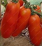 Las semillas 100pcs grande gigante del tomate San Marzano Tomate de la herencia Fresh & Vegetable Seeds Oganic Superior Taste Para el hogar de plantación