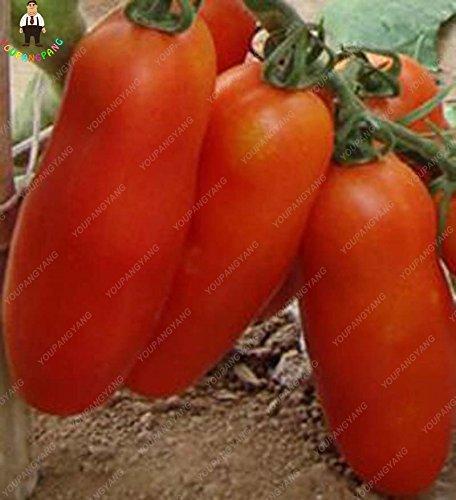 100pcs géant Big graines de tomates San Marzano tomates Heirloom frais et Oganic Graines de légumes Superior Taste pour la plantation Accueil