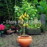 Cheap! Bonsai Pear Tree Seeds (10 Pieces per bag) PLUS GIFT Perennial Bonsai Fruit Seeds