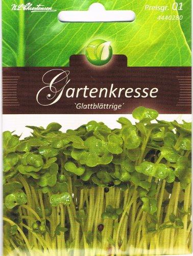 Gartenkresse Glattblättrige Kresse