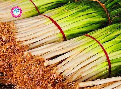 100pcs graines d'oignon géant chinois, l'oignon vert, les graines de fruits de légumes Heirloom bio, doux et sain, pour la plantation de jardin à domicile