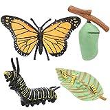 Figuras de etapas del ciclo de vida de la mariposa, ciclo de crecimiento de alta simulación Modelo de mariposa Educación científica para niños Modelo cognitivo para material didáctico(Insecto)