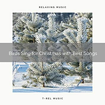 Birds Sing for Christmas with Best Songs