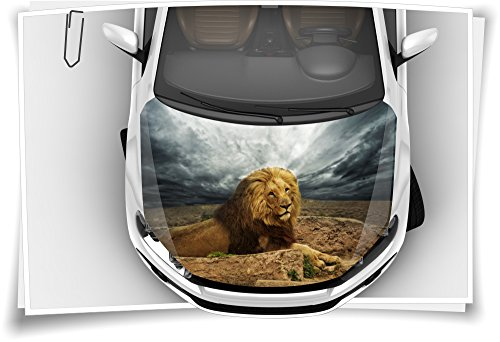 Medianlux Löwe Afrika König Motorhaube Auto-Aufkleber Steinschlag-Schutz-Folie Airbrush Tuning Car-Wrapping Luftkanalfolie Digitaldruck Folierung