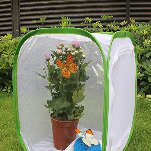 Pangdingk Einfach zu faltender Maschentuch Material Faltbarer Insektenkäfig, Belüfteter Faltbelüfteter Insektenkäfig, Anlage für zu Hause