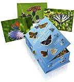 100 Schmetterlinge der Schweiz - Postkartenbox