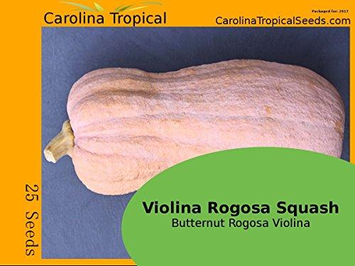 "Violina Rogosa Squash - Butternut Rogosa Violina""Gioia"" Squash - 25 Seed Count"