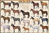 Educational - Bildung Pferde - Horses Pferde Bildungsposter