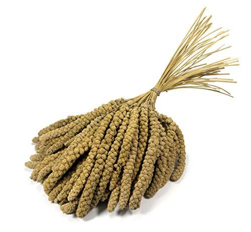 Granos de mijo de 10 pulgadas Britten & James® Premium Quality. Aproximadamente 1 kg 🔥