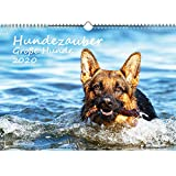 Hundezauber Große Hunde DIN A3 Kalender 2020 Welpen und Hunde und zusätzlich 1 Geschenkkarte - Seelenzauber