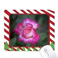 ピンクの美しい花の花びら ゴムクリスマスキャンディマウスパッド