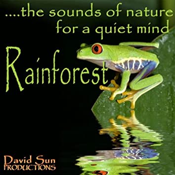 Rainforest (The Sounds of Nature for a Quiet Mind)