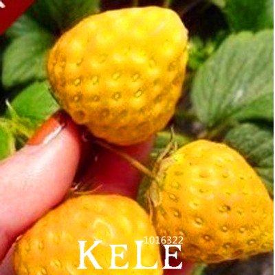 Les plus vendus . 50 pcs/semences du jaune du sac de la fraise de la fruits Patio et jardin de la fraise de la fruits du pot plantaire semences, # 61 W40 m