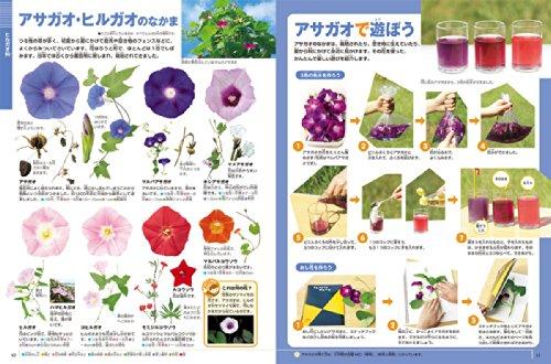 DVD付花(小学館の図鑑NEO)