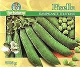 L'ortolano sementi di legumi (piselli, fagioli ecc.) di qualità in confezioni varie (pisello rampicante telefono, 500 grammi)