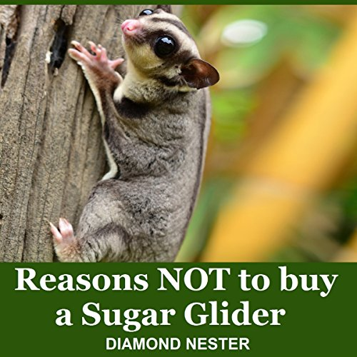Reasons Not to Buy a Sugar Glider audiobook cover art