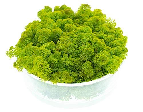 DauerFloristik Islandmoos limettengrün 1kg konserviert