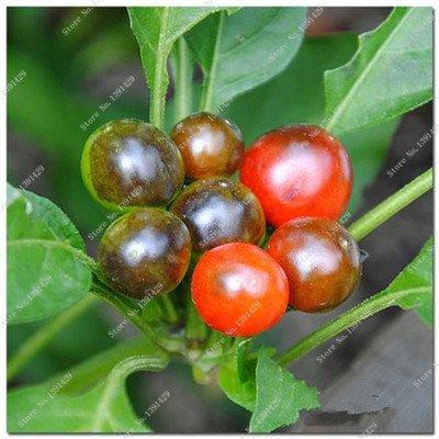 Cerise poivre Graines Bonsai plantes ornementales délicieux Chili Capsicum semences Diy jardin ménages croissance naturelle 300 semences 1