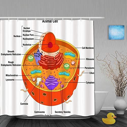 DYCBNESS Duschvorhang,Struktur des Anatomiediagramms von Pflanzentieren Alle Struktur Wissenschaft Teil Mitochondrien Humanphysiologie, Bad Vorhang Wasserdichtes Design,mit Haken 180x180cm