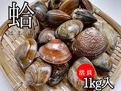 産直丸魚  「活」 はまぐり 1kg入 小ぶりですが旨味のある、おいしい活貝のハマグリです    蛤 浜栗 活 ハマグリ
