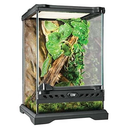 Frog Terrarium Amazon Com