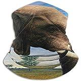 WCUTE Elefante Blue Sky Fleece Cuello Polainas Cubierta Cuello Polainas Tubo Fleece Cara Bufanda Atrapamiento térmico Pasamontañas Media máscara