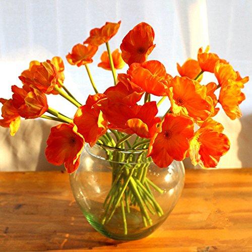 Orange Flowers Amazon