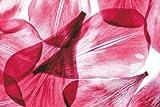 Fototapete Dunkelrote Blütenblätter - Größe 180 x 270 cm, 2-teilig