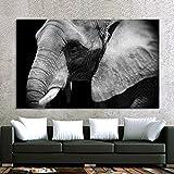 NIMCG Carteles e Impresiones de Animales Arte de la Pared Pintura de la Lona Imágenes de Elefantes en Blanco y Negro para la decoración del hogar de la Sala de Estar (sin Marco) 50x70 cm