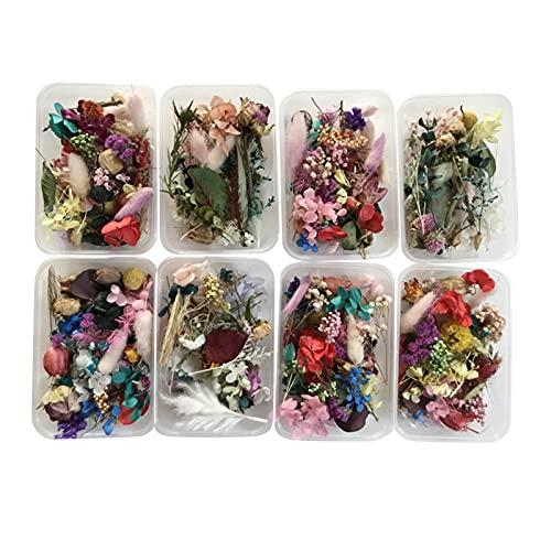 RUIXI Mini Kit di Fiori Secchi Foglia di Fiore Pressata Naturali Profumi di Boccioli Crisantemi per DIY Candela Sapone Gioielli in Resina Unghie Labbra ,Decorazioni Florealiper Regali DIY