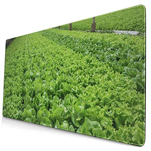 Gaming-Mauspad, Premium-strukturierte Mauspad-Pads, süßes Mousepad für Spieler, Büro- und Heimfarmsalat Grüner Salat Gewächshaus Modern Agricultural Beautiful Bunch