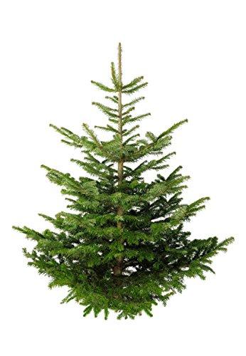 Echter Premium Weihnachtsbaum Nordmanntanne Tannenbaum Christbaum frisch geschlagen 1. Wahl versch. Größen (80-100 cm)