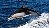 Puzzle 1000 Piezas para adultos Ocio Entretenimiento Ocio exterior Juguetes para niños Regalos-Nadar con delfines