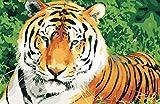 Kits Manualidades Pinturas para Lienzo Tigre Pinturas Oleo DIY Regalos Pinturas con Numeros para Adultos 40X50Cm