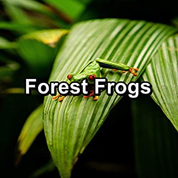 Forest Frogs