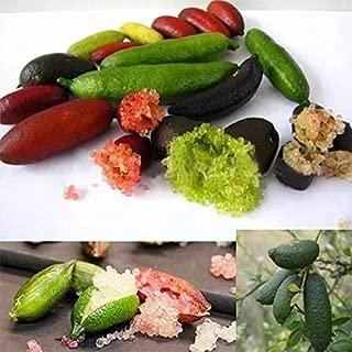 20pcs Mixed Seeds Australian Finger Lime Green red Pink Fruit Home Garden Plants
