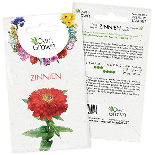 Zinnien Samen: Premium Zinnia Elegans Samen für 60 blühende Zinnien Pflanzen – Zinnie Samen – Bunte Blumensamen – Blumenwiese Samen und Balkonblumen Samen – Saatgut Blumen – Samen Bienen von OwnGrown